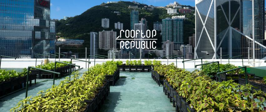 Rooftop Rebublic Garden Plant Urban